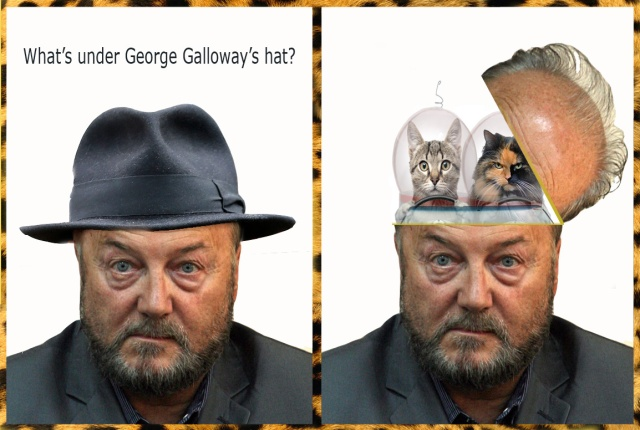 whats under galloways hat cat craft