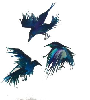 blog-crows