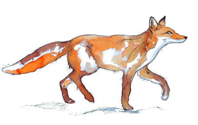 batty island sketches fox small
