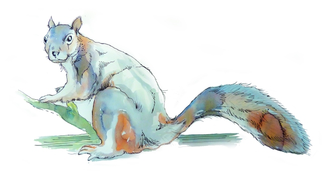batty island sketches squirrel small